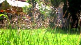 Herbe de fleur sous le soleil près de la maison vidéo banque de vidéos