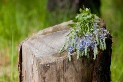 Herbe de fleur sur le vieux tronçon en bois Photo stock