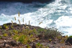 Herbe de fontaine sur la roche Photo stock