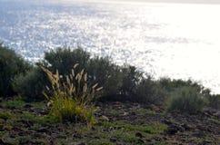 Herbe de fontaine sur la roche Photographie stock