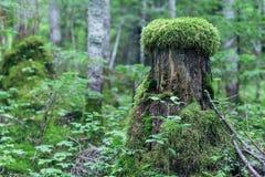 Herbe de forêt Photo libre de droits