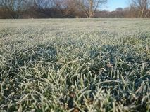 Herbe de Frost Photos stock