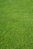 Herbe de golf Image libre de droits