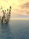 Herbe de l'eau Photographie stock libre de droits