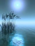 Herbe de l'eau Images libres de droits