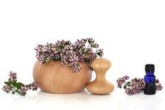 Herbe de marjolaine avec des fleurs Photographie stock