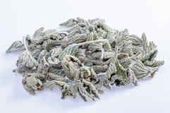 Herbe de marube photographie stock