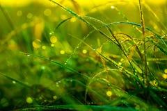 Herbe de matin après pluie dans le soleil de matin éclairé à contre-jour image stock