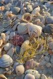 Herbe de mer Photo libre de droits