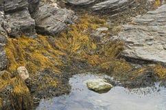 Herbe de mer Photographie stock libre de droits