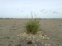 Herbe de mer dans la marée basse Photo stock