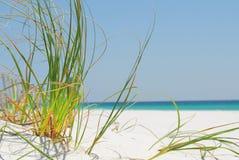 Herbe de mer sur la plage de Pensacola Photographie stock libre de droits