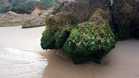 Herbe de mer verte Photographie stock