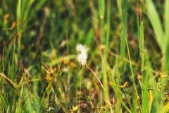 Herbe de milieux de nature Images libres de droits