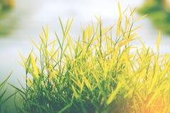 Herbe de nature et de fond blanc Photo libre de droits