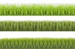 Herbe de Novruz Photographie stock libre de droits