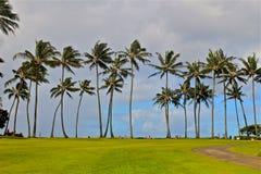 Herbe de palmiers Photos stock