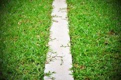 Herbe de passage couvert entre les buissons dans le jardin le long de l'espace s Photographie stock libre de droits
