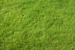 Herbe de pelouse Photos libres de droits