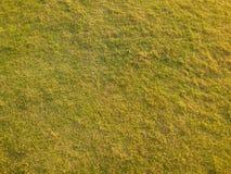 Herbe de pelouse Images libres de droits