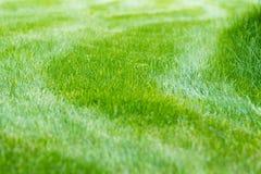 Herbe de pelouse avec des rayures Photo libre de droits