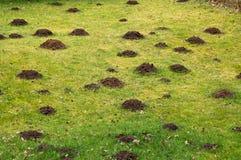 Herbe de pelouse détruite Photos libres de droits