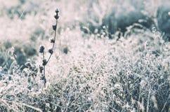 Herbe de pré congelée photo libre de droits
