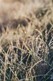 Herbe de pré congelée image libre de droits