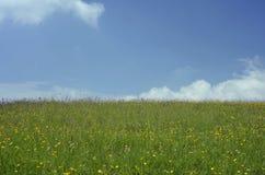 Herbe de pré d'été et fleurs sauvages image stock