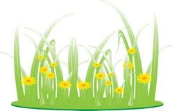 Herbe de pré de floraison, herbe verte Photos libres de droits