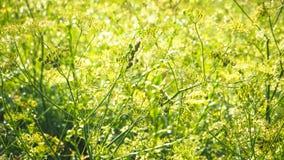 Herbe de pré, herbes d'été Fond naturel abstrait Photo libre de droits