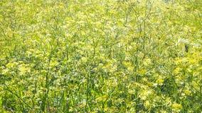 Herbe de pré, herbes d'été Fond naturel abstrait Image libre de droits