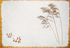 Herbe de pré sèche sur le sable Photographie stock libre de droits