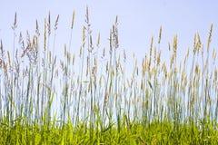 Herbe de prairie images stock