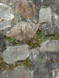 herbe de roche Photos libres de droits