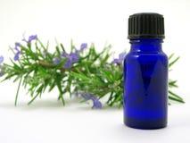 Herbe de Rosemary et bouteille de pétrole Photo libre de droits