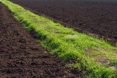 Herbe de route sur la terre fertile Photographie stock