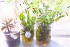 Herbe de Saint-Jacques, pissenlit, épilobe, cactus dans le pot Photo stock