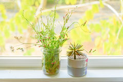 Herbe de Saint-Jacques, pissenlit, épilobe, cactus dans le pot sur le CCB de fenêtre Image stock