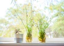 Herbe de Saint-Jacques, pissenlit, épilobe, cactus dans le pot sur le CCB de fenêtre Photos libres de droits