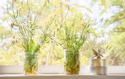 Herbe de Saint-Jacques, pissenlit, épilobe, cactus dans le pot sur le CCB de fenêtre Photographie stock