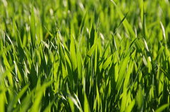 Herbe de source Photo stock