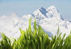 Herbe de source en montagnes image libre de droits