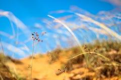 Herbe de Sun avec le ciel bleu au foyer mou (ton vif) Photos stock