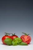 Herbe de tomate et de basilic Photo stock