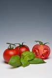 Herbe de tomate et de basilic Photographie stock libre de droits