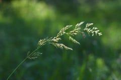 Herbe de transitoire au soleil photographie stock