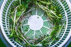 Herbe de verts micro dans le dessiccateur blanc photos stock