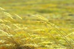 herbe de zone Photos libres de droits