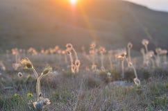 Herbe des montagnes et coucher du soleil Photos stock